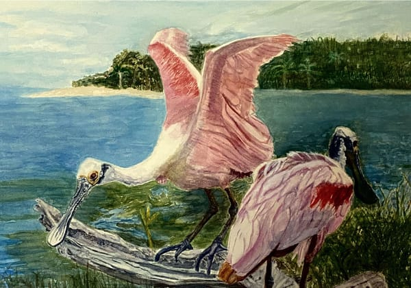 Spoonbills Food Search, Orignal Watercolor