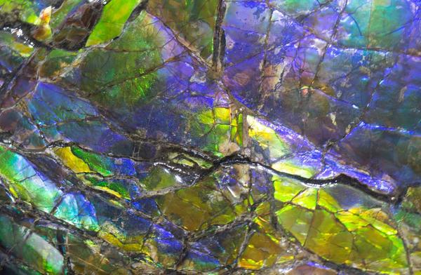 Ammolite 1 Art | Rhona LK Schonwald