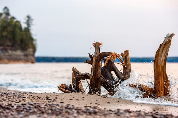 Driftwood at Miners Beach