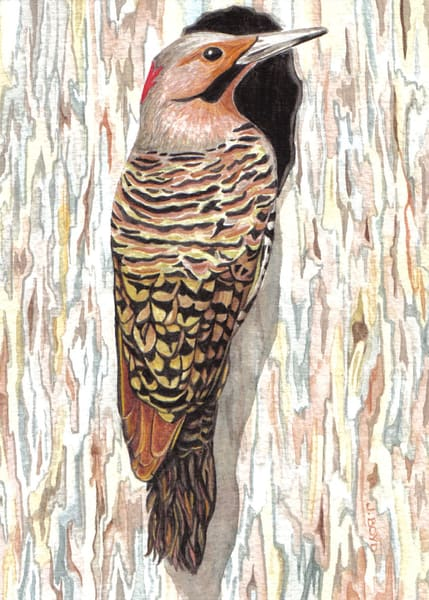 Northern Flicker: Fine art reproduction of original painting by Judy Boyd Watercolors