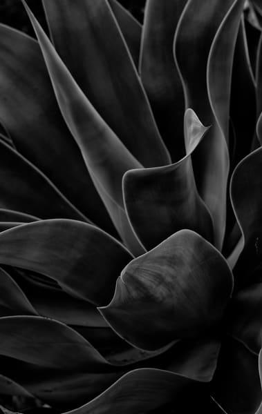 Folds Photography Art | GW Fine Art Images