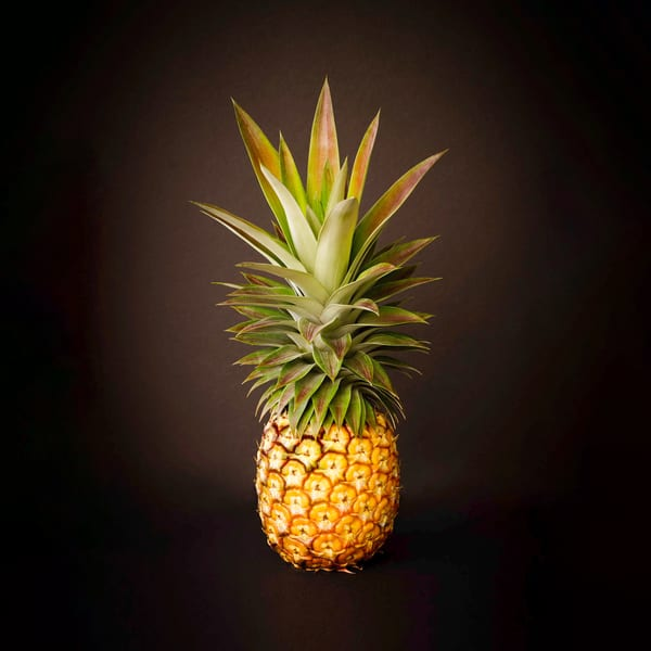 White Pineapple King Square Photography Art | Bird In Paradise