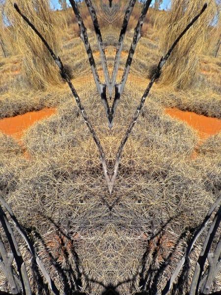 SPIRIT OF PLACE/ DESERT