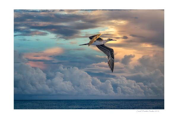 Sunrise Flight   Signed 2012 Photography Art | Carol Brooks Parker Fine Art Photography