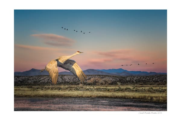 Sandhill Crane In A New Mexico Landscape   Signed 2012 Photography Art | Carol Brooks Parker Fine Art Photography