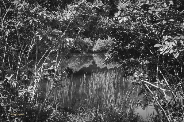 Pond in Black and White | Shop Prints | Robert Shugarman Photography