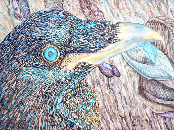 Young Raven: Reproduction of original painting by Judy Boyd Watercolors