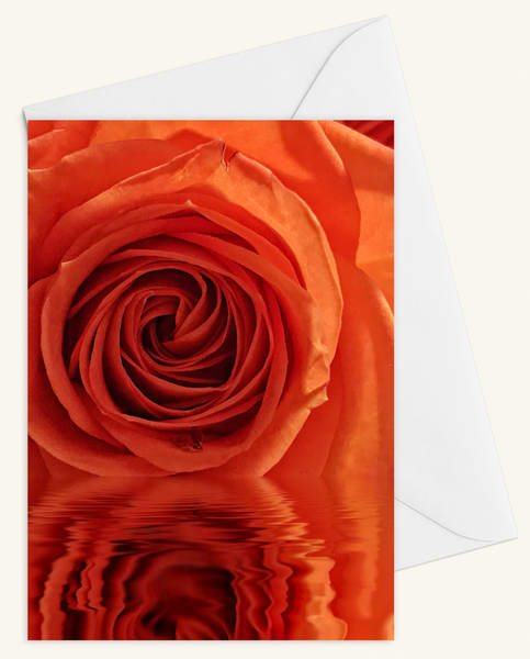 Rose Reflection Blank 5x7 Card