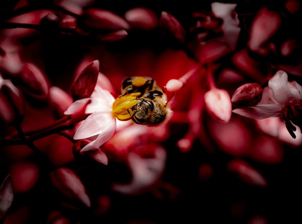 The Red Bee