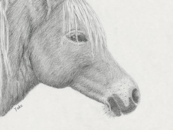 'mare Profile' Wild Pony Collection Photography Art | Nature's Art Productions