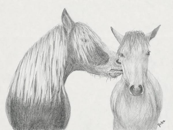 'mr And Mrs' Wild Pony Collection Photography Art | Nature's Art Productions