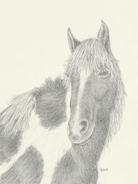 'multi Color Mare' Wild Pony Collection Photography Art | Nature's Art Productions