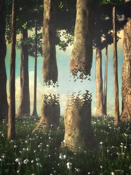 Fragmentary Forest   Cynthia Decker