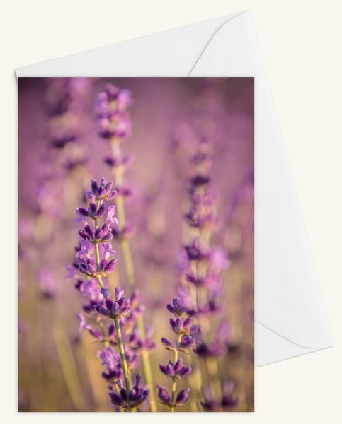 Fragrant Blooms Of Purple Blank 5x7 Card