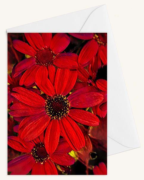 Cineraria Blank 5x7 Card