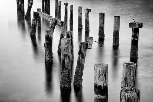 Old Dock Pilings, Cummings Park, Tacoma, Washington, 2014