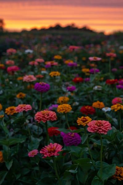 Sunset Flowers Art | Brandon Hirt Photo