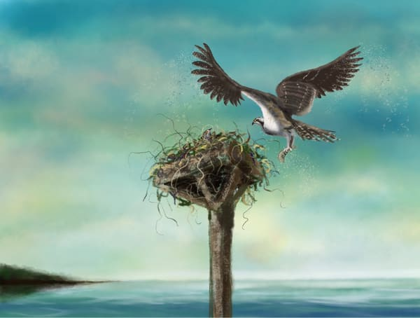 Osprey at the Nest, digital painting by Holly Whiting