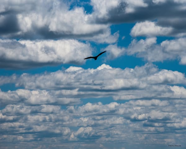 Soaring Photography Art | N2 the Woods Photography