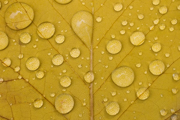 Dew Drops On Leaf Photography Art | Matt Cuda Nature Photography