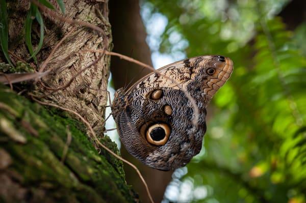 Butterfly 10 Photography Art | Cardinal ArtWorks LLC