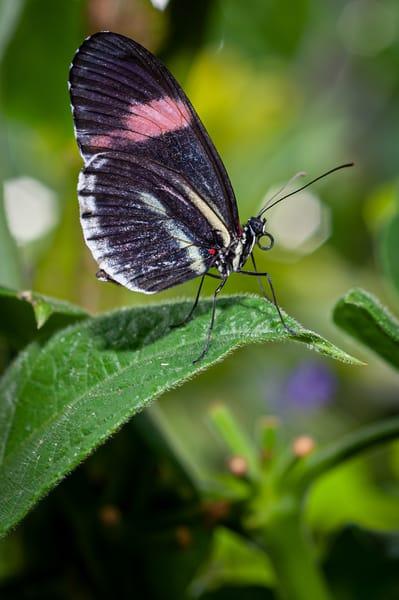 Butterfly 14 Photography Art | Cardinal ArtWorks LLC