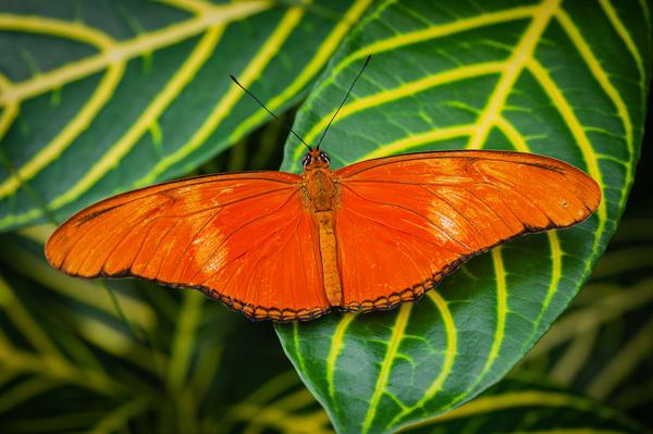 Butterfly 13 Photography Art | Cardinal ArtWorks LLC