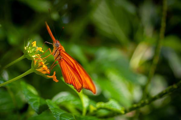 Butterfly 11 Photography Art | Cardinal ArtWorks LLC