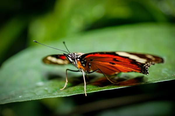 butterfly from the butterfly conservatory