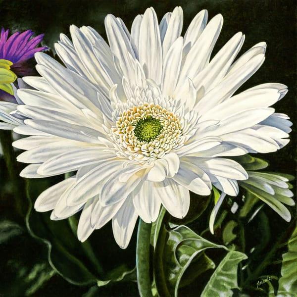 White Gerber   Cheer Art   Mercedes Fine Art