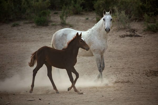 0092 2 Mare And Colt  Art | Cunningham Gallery