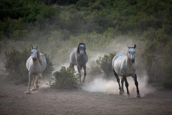 0059 3 Horses Running  Art | Cunningham Gallery