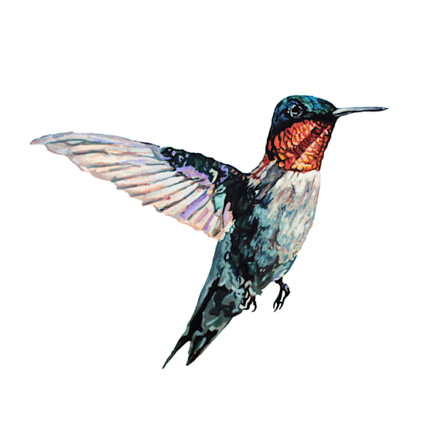 hummingbird, bird, ruby throated, pollinator