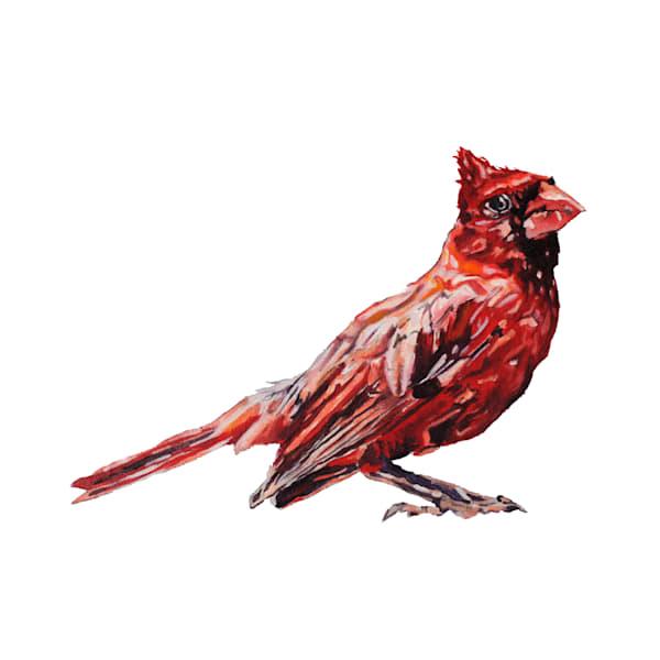 cardinal, bird, red bird