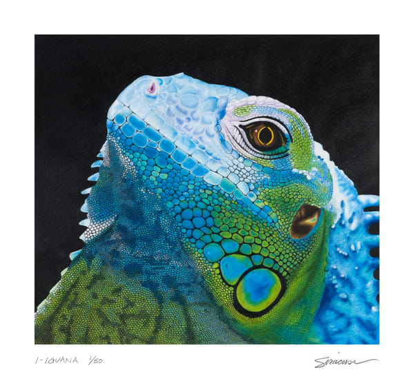 I Iguana Limited Edition Print Art | juliesiracusa