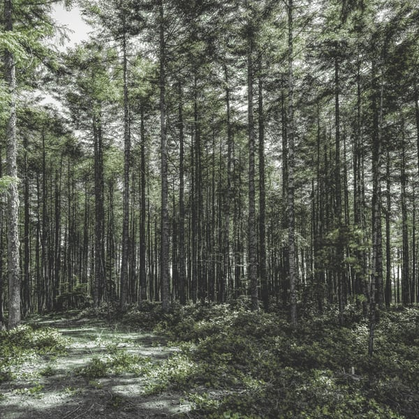 Saltspring Forest Green Art | James Alfred Friesen