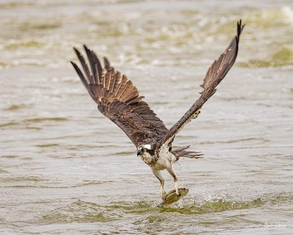 Osprey Bass Tracker