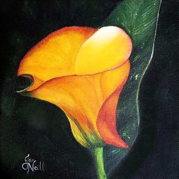 JONeill-Calla-Lily-Yellow