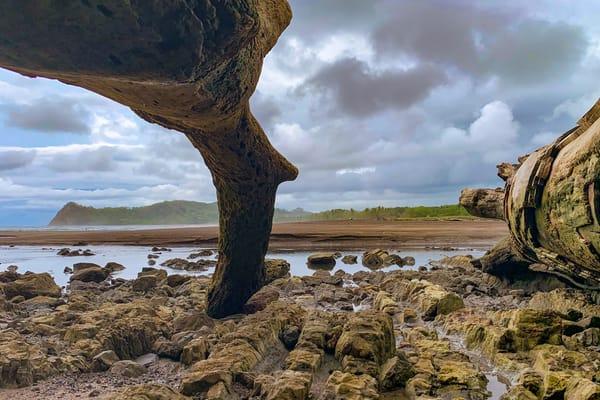 Beach Wood  Photography Art | Alex Nueschaefer Photography