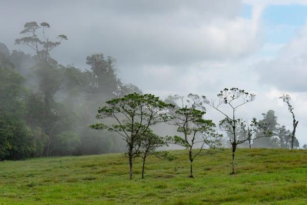Cloud Forest  Photography Art | Alex Nueschaefer Photography