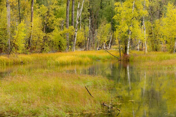 Fall colors around pond in Alaska.