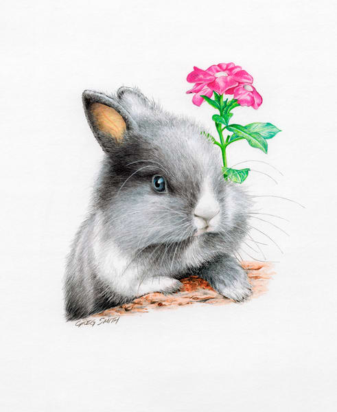 Baby Bunny is a color pencil painting on heavy art paper by Greg V Smith