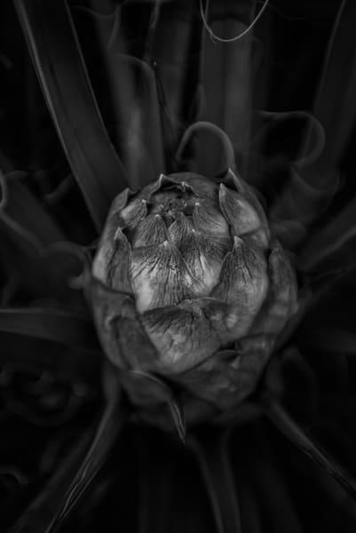 Joshua Tree Flower  Joshua Tree Np Photography Art | Casey McFarland Photography