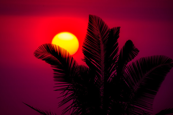 Sunset Behind Palm Tree