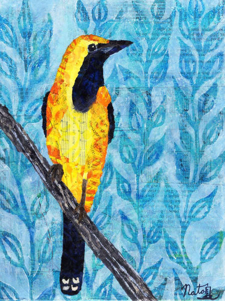 Backyard Birds: Mr. Hooded Oriole   Art | Poppyfish Studio