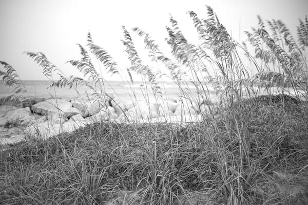 Coastal Breezes 1