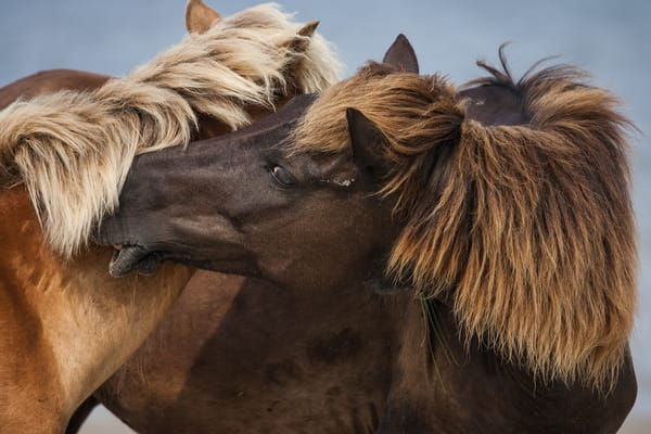 Shackelford Horses 7698 Photography Art | Matt Cuda Nature Photography