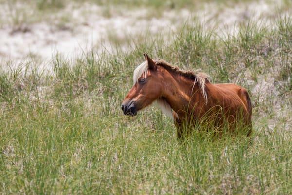 Wild Horse on Dune