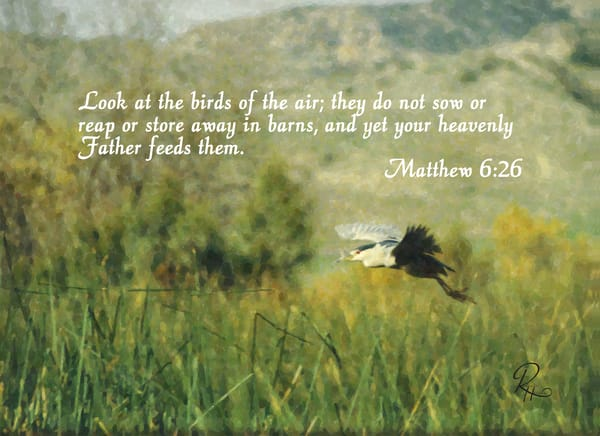 Matthew 6:26 Photography Art | Lion's Gate Photography