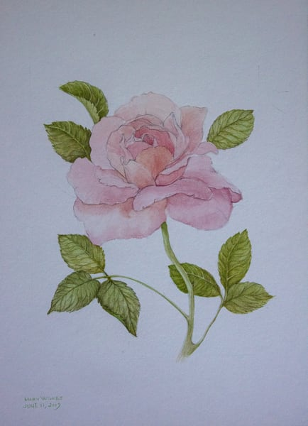 Study Of A Rose, Acrylic On Paper, 2009 Art | Roost Studios, Inc.